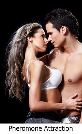 Pheromone Attraction for Guys