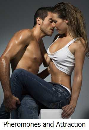 Pheromones and Attraction for Men