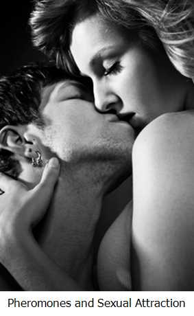 Pheromones and Sexual Attraction for Men